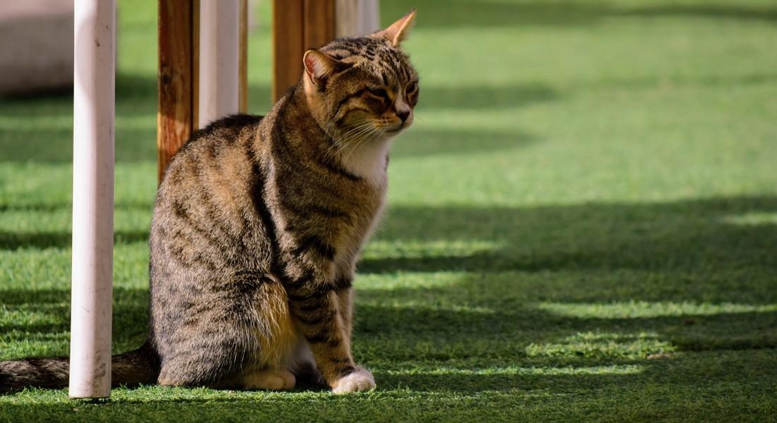 В России учрежден Союз музейных котов