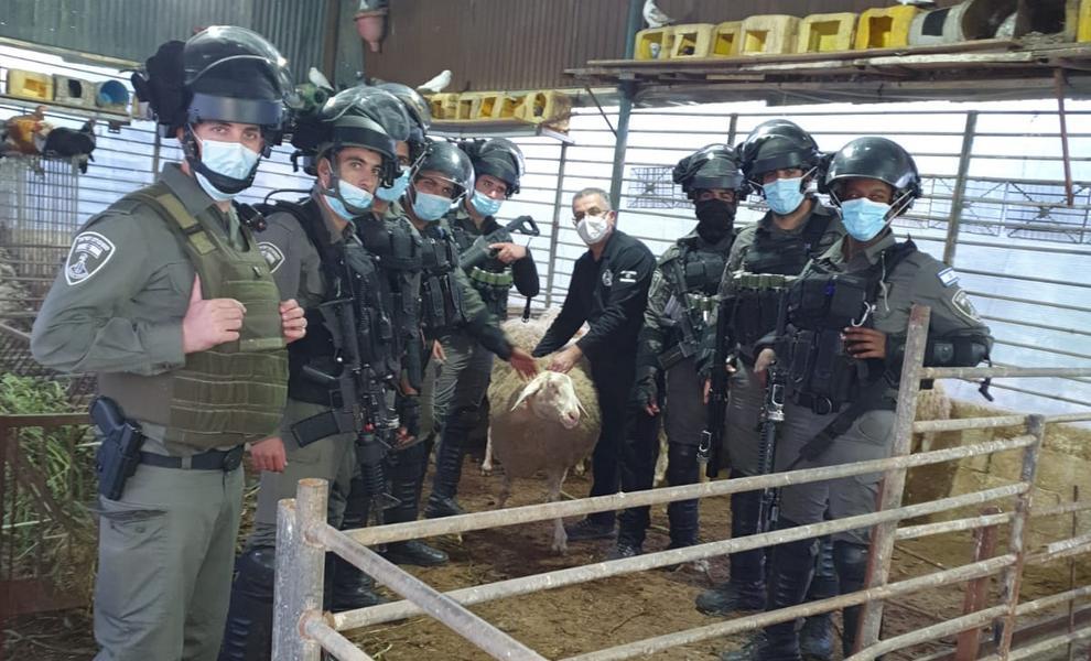 """И овцы целы: бравые """"магавники"""" вернули отару, украденную арабами"""